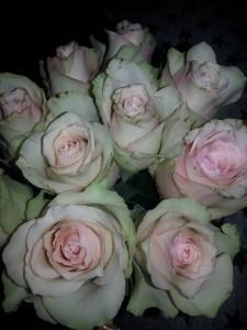 Blekrosa rosor