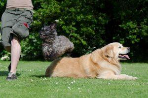 dog-trick-750630_1920