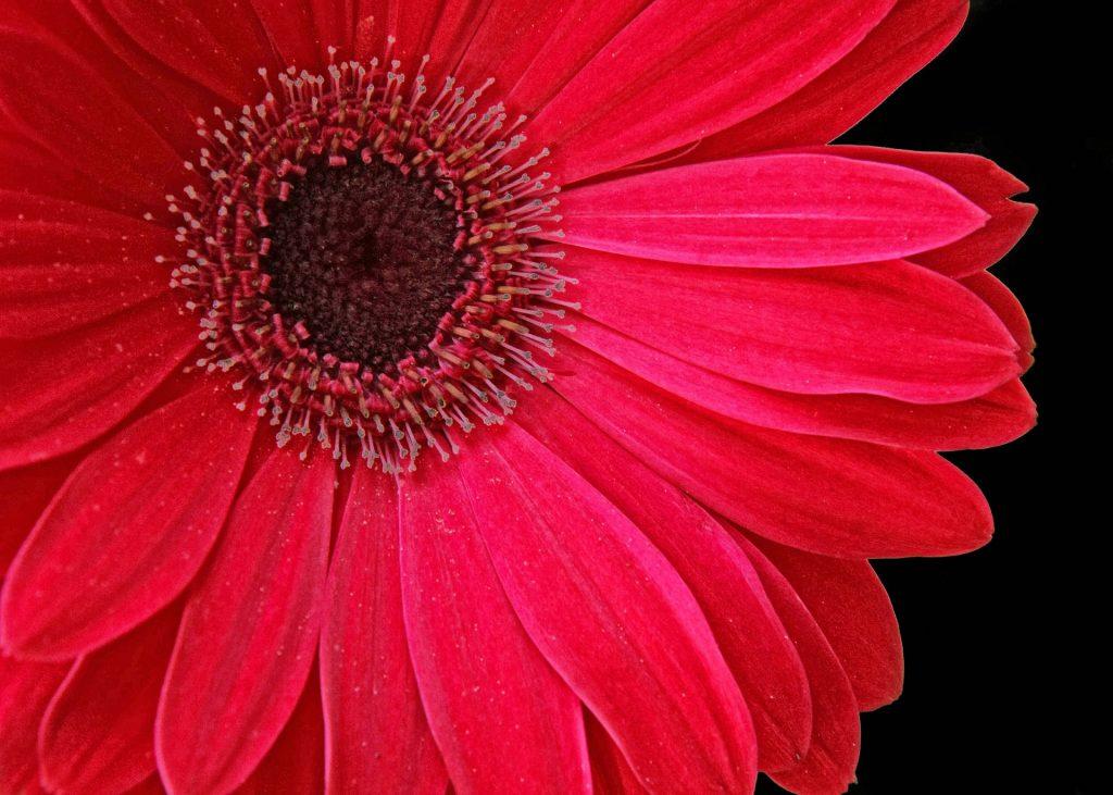 floral-839992_1920