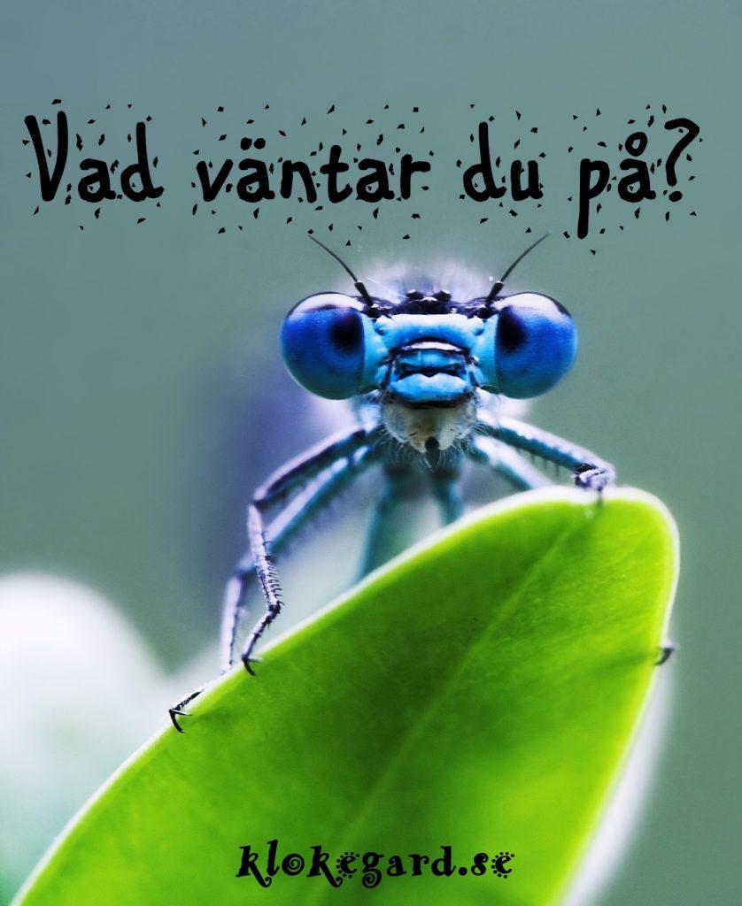 dragonfly-1001225_1280