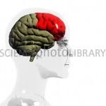 Hjärnan är som Google