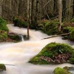 Medvetenhet och tacksamhet i nuet – vår skaparkraft