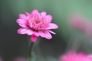 blossom-247407_1920