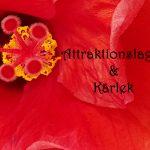 Attraktionslagen & Kärlek